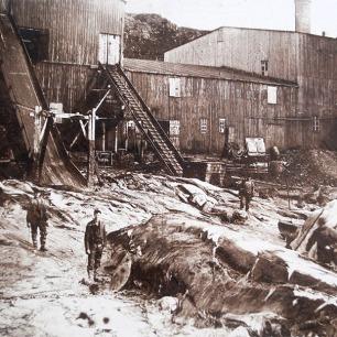 Walschlachtung, Nordcapreise um 1890, Coll.Mila Palm